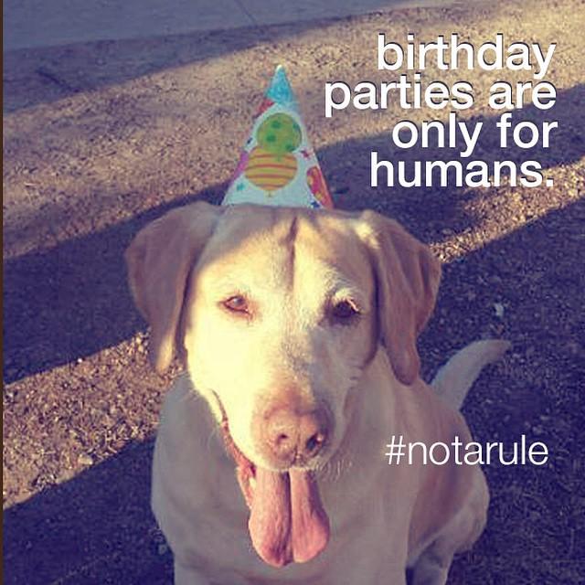 pet-birthdays