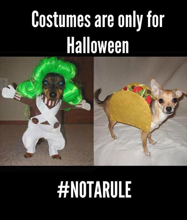 Kristen-Clark-halloween-costumes
