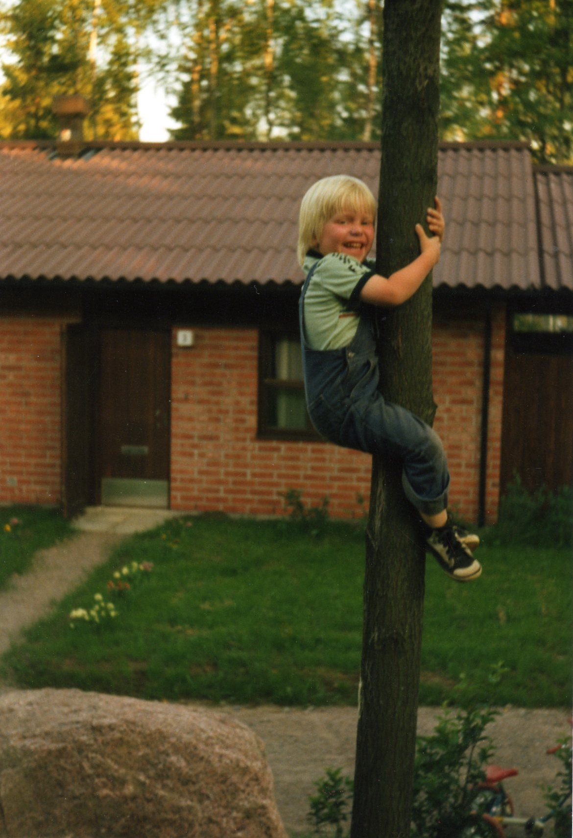 young_ville_in_a_tree.jpg