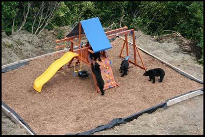bears_playground.jpg