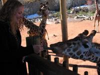 feeding_giraffe.jpg