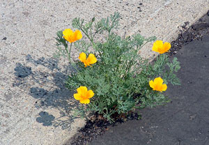 flower_sidewalk_crack.jpg