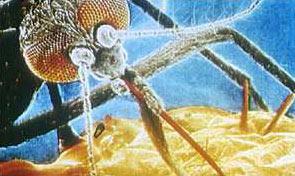 giant_mosquito.jpg