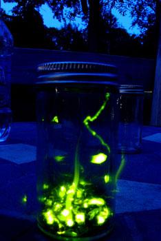 http://kimandjason.com/blog/wp-content/uploads/2009/08/firefly_jar.jpg