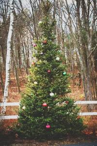 Christmas Vandalism