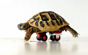 Saturday Morning Sprinkles:  Lego Wheelchair for a Tortoise Edition