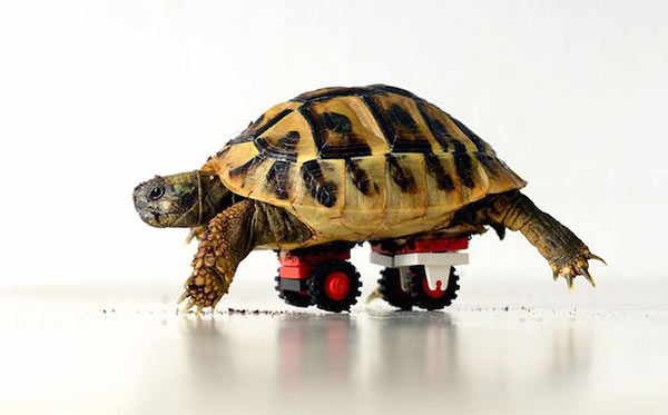 lego-turtle