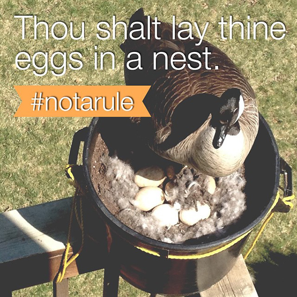 eggs-in-a-nest