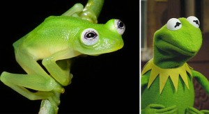Saturday Morning Sprinkles: Real Life Kermit the Frog Edition