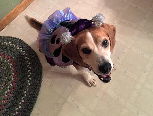 ballerina-dog